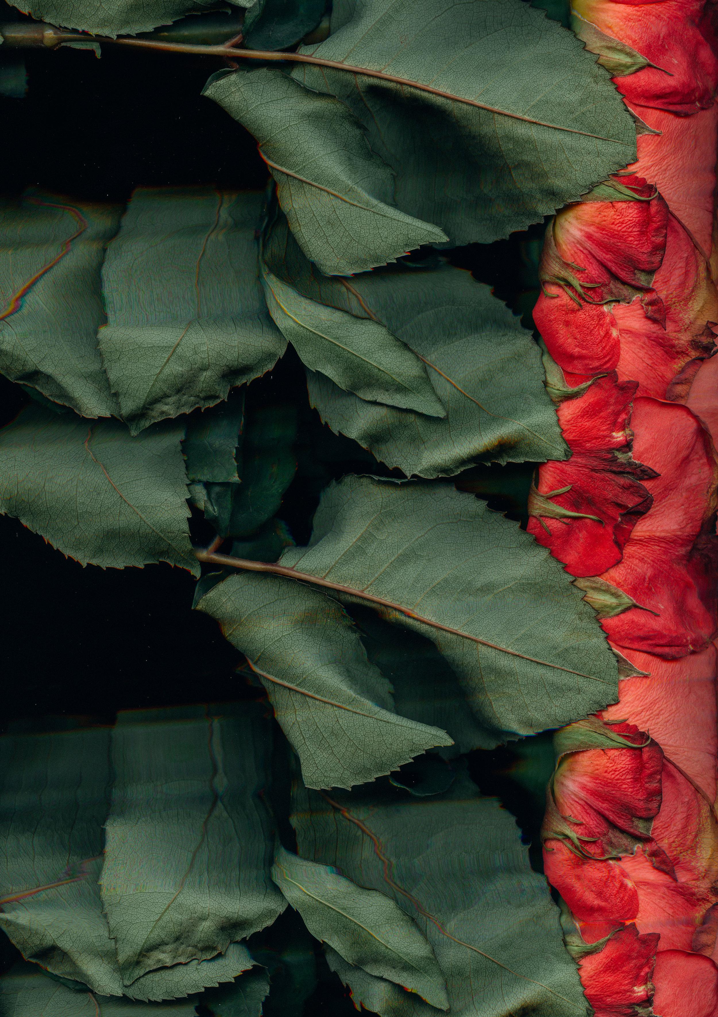 Flowers (16).jpg