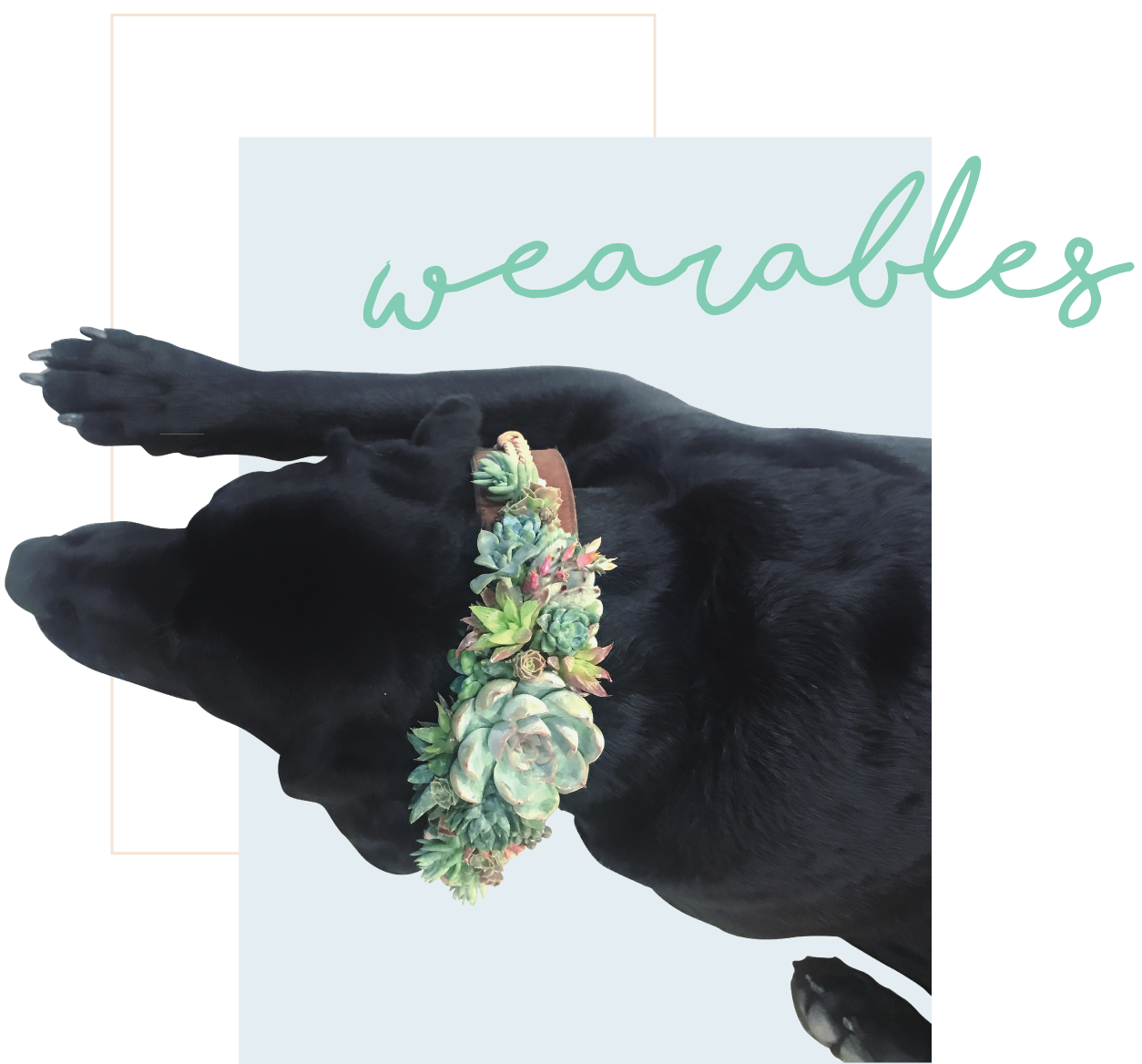 wearablesheader.png