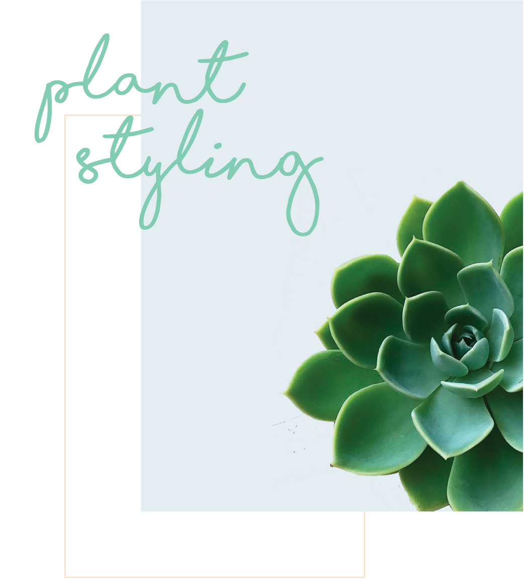 plant-styling.png