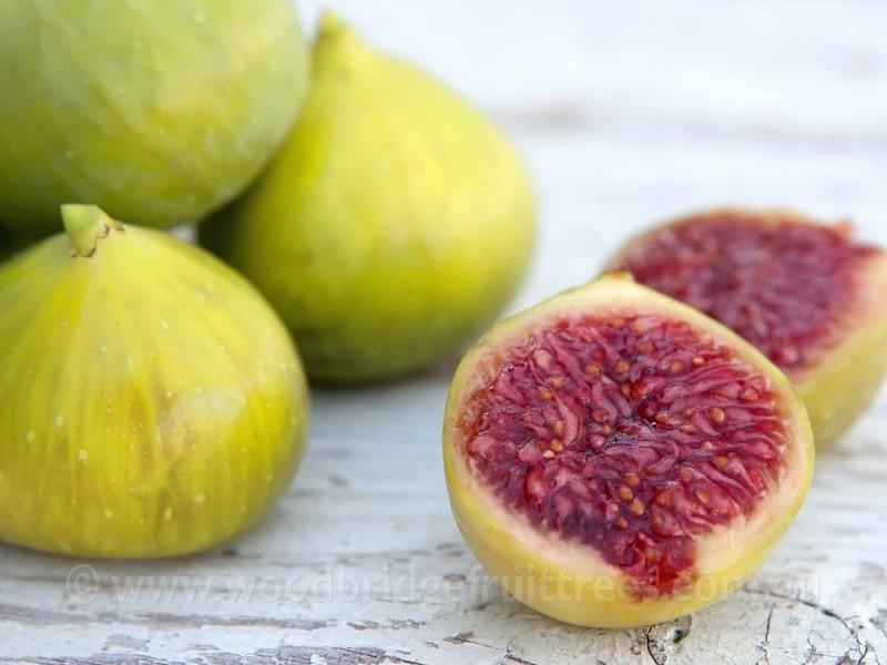 Figs 3.jpg