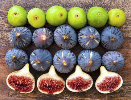 Figs 9.jpg