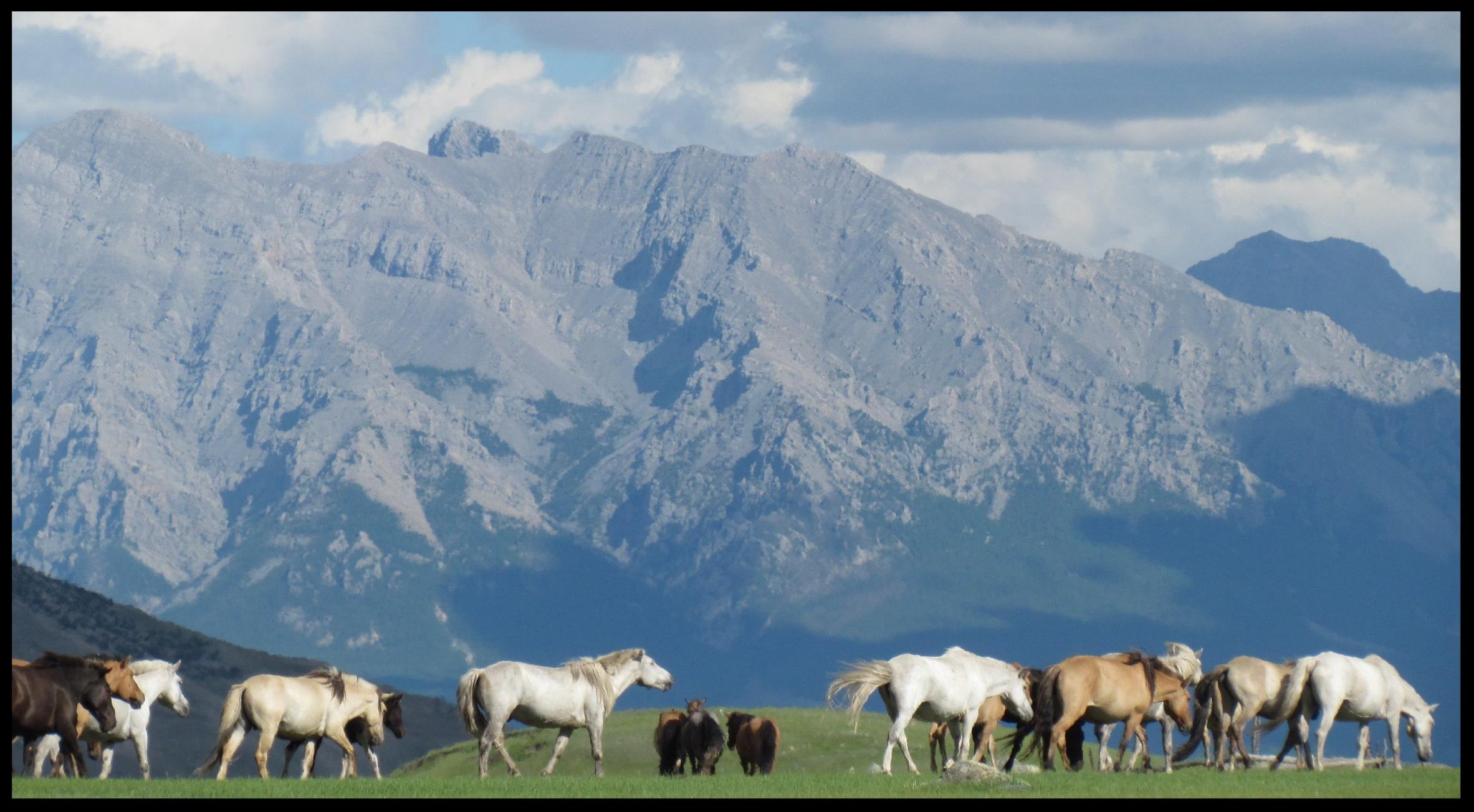 Horses graze in the scenic Darkhad Depression