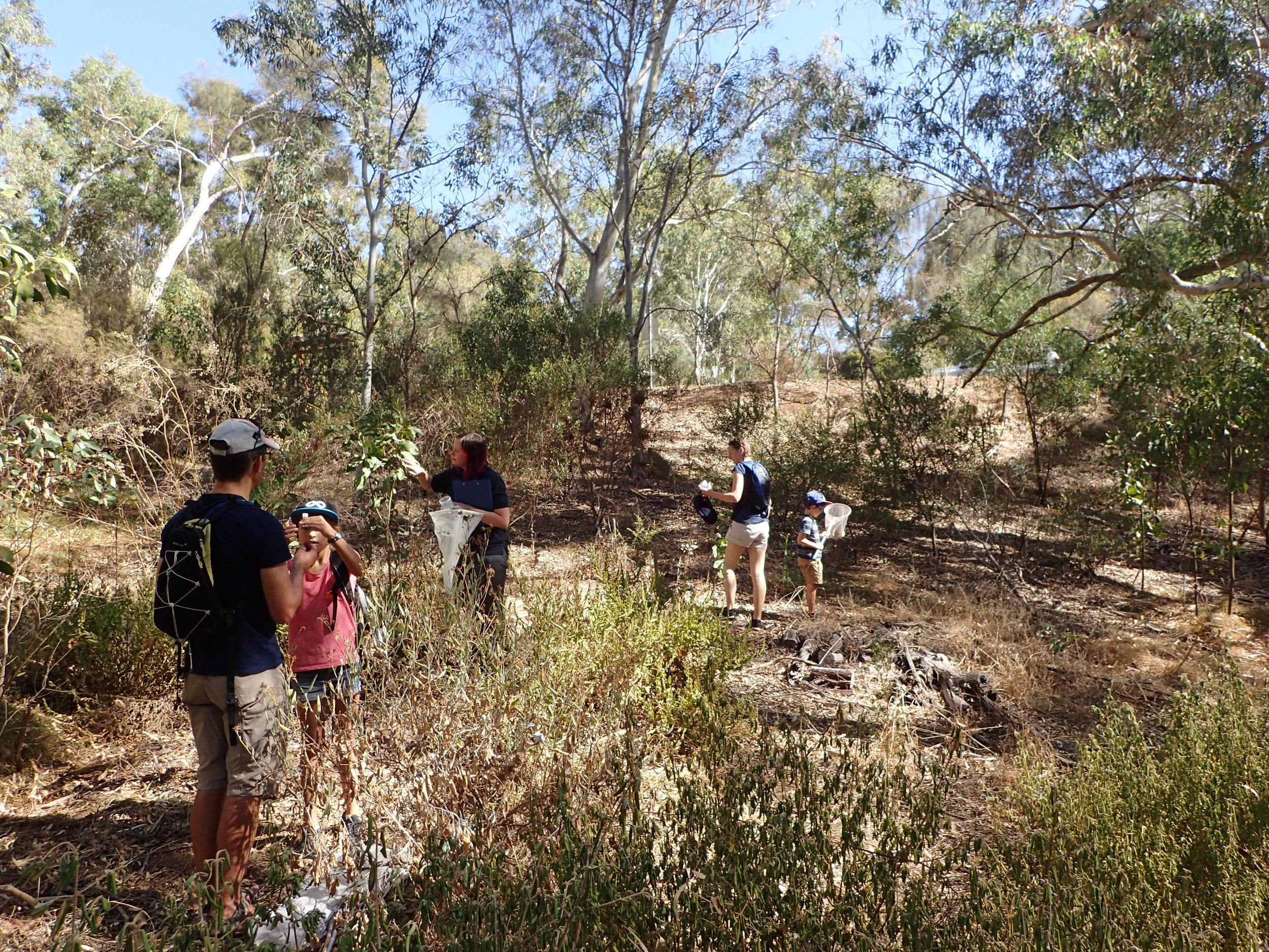 Morialta MiniBlitz - In April 2018, Friends of Morialta and Black Hill hosted a number of local scientists and naturalists for half a day in one of their regular 'mini bio-blitz' activities. However, in addition to the biological surveys, for the first time, they also hosted a number of activities focused on nature connection. These included sessions for Forest Bathing and Nature Art/Mandala Making.