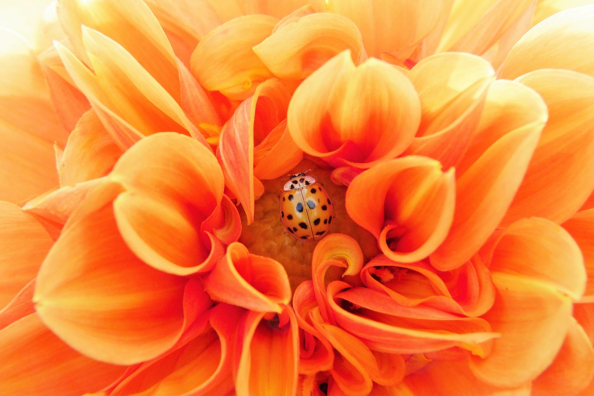 Fertility - Increasing your chances. Dealing with the setbacks of failure and delay. Maintaining a relaxed, happy focus.