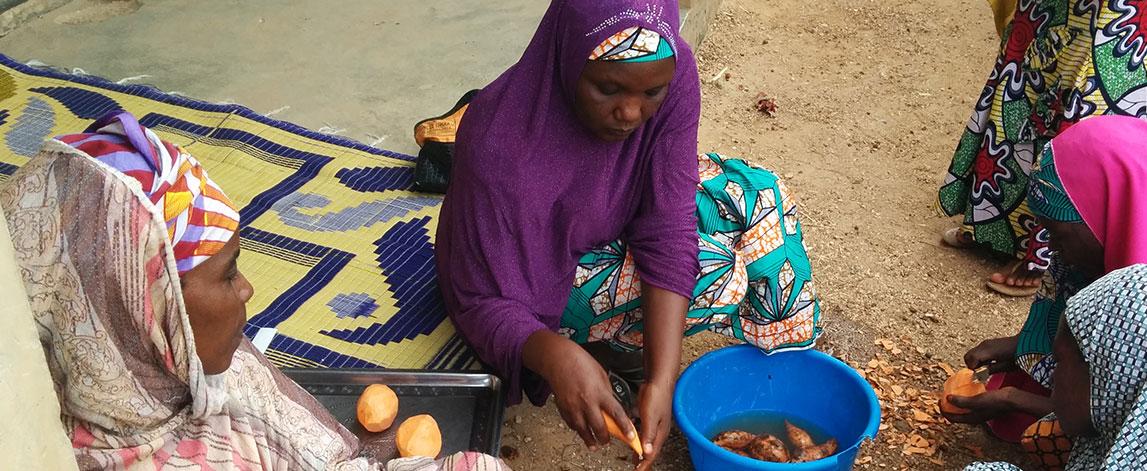 Orange Fleshed Sweet Potato Project (OFSP) -