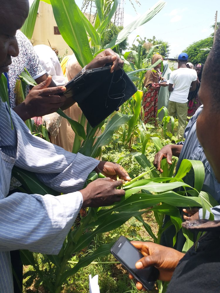 Farmers in Kano using Cornbot to identify FallArmy Worm