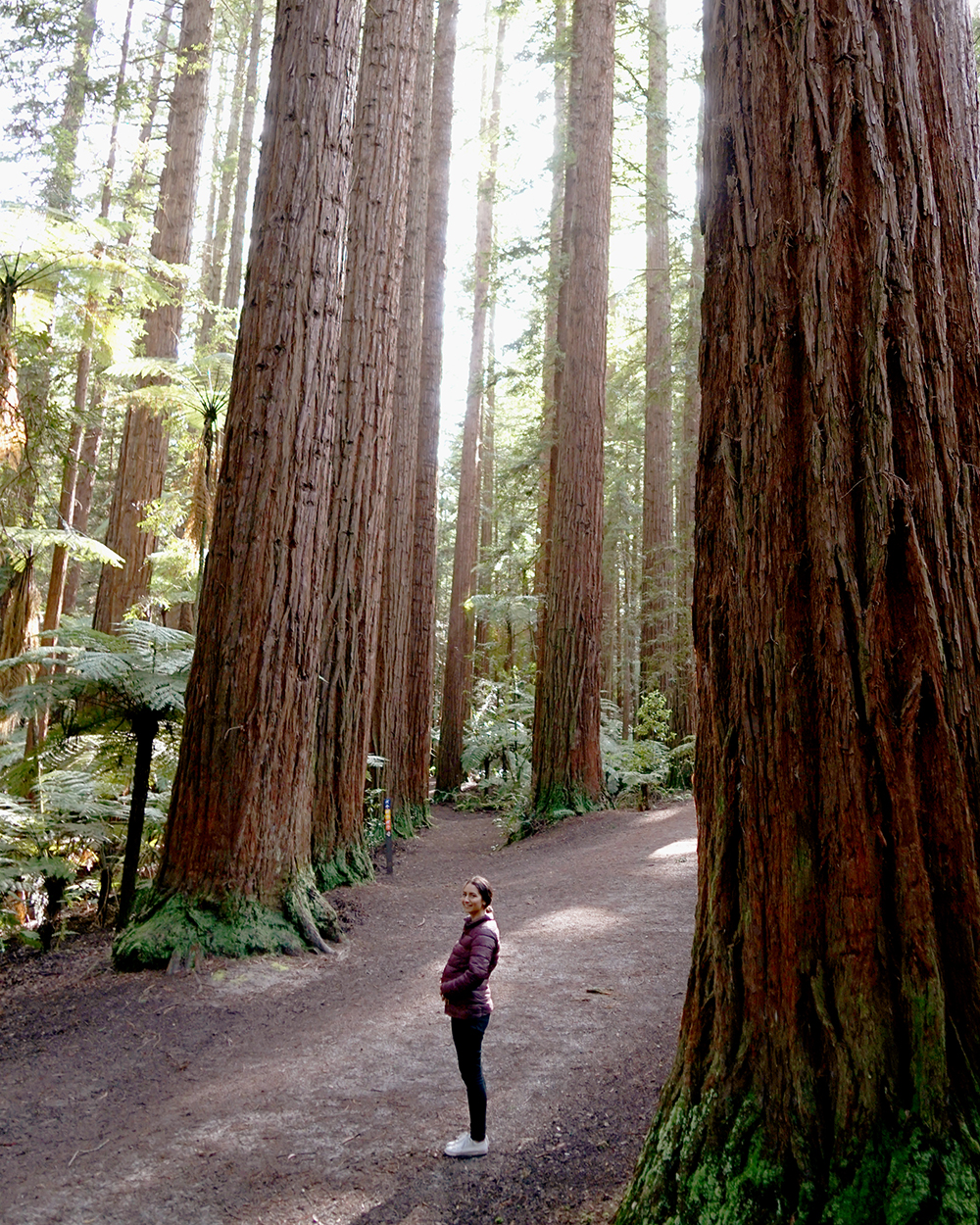 If you were keeping up with the Duke and Duchess of Sussex's first overseas tour as a married couple you will know that they ended it with a trip to the Redwoods forest. I couldn't resist copying the photo that Harry took of Meghan with her baby bump but NO I am not pregnant, this is not an announcement photo.