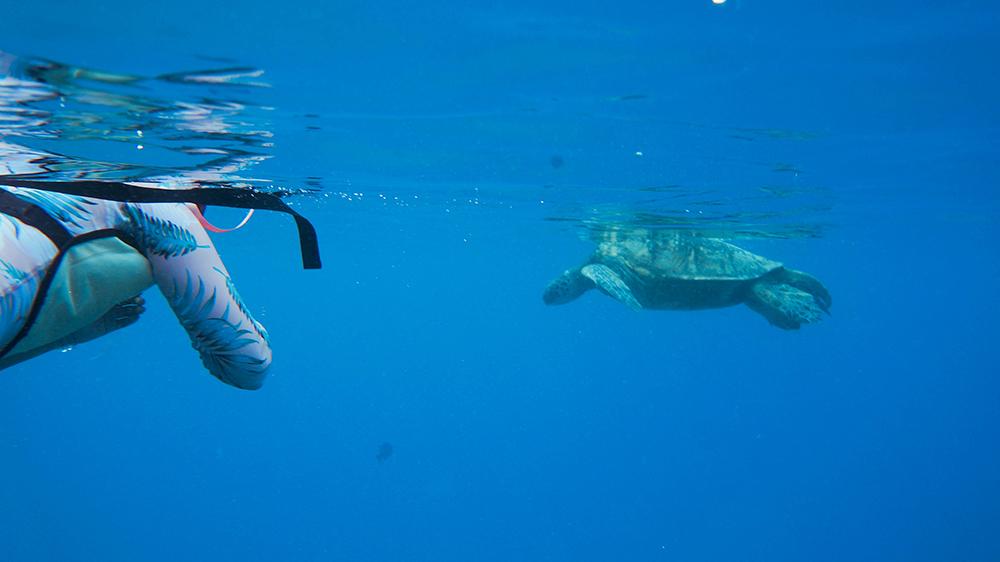 Green Sea Turtles Hawaii to do