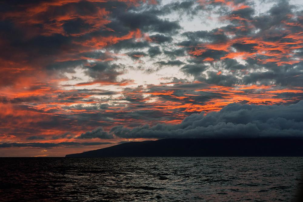 Whale Watching Sunset Maui Hawaii to do