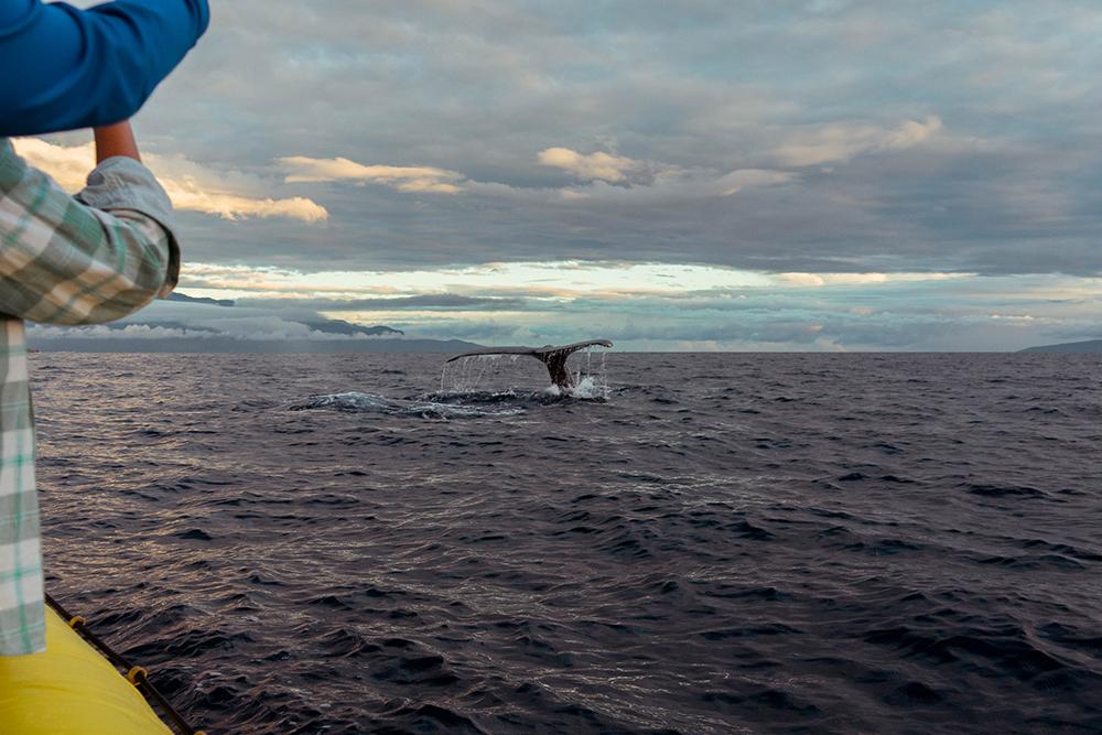 Whale Watching Maui Hawaii to do