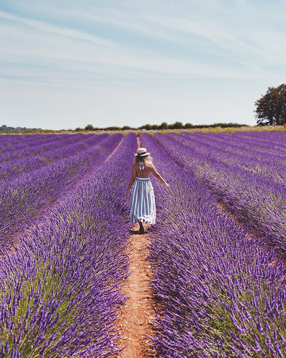 Norfolk Lavender, Postcards from Hawaii