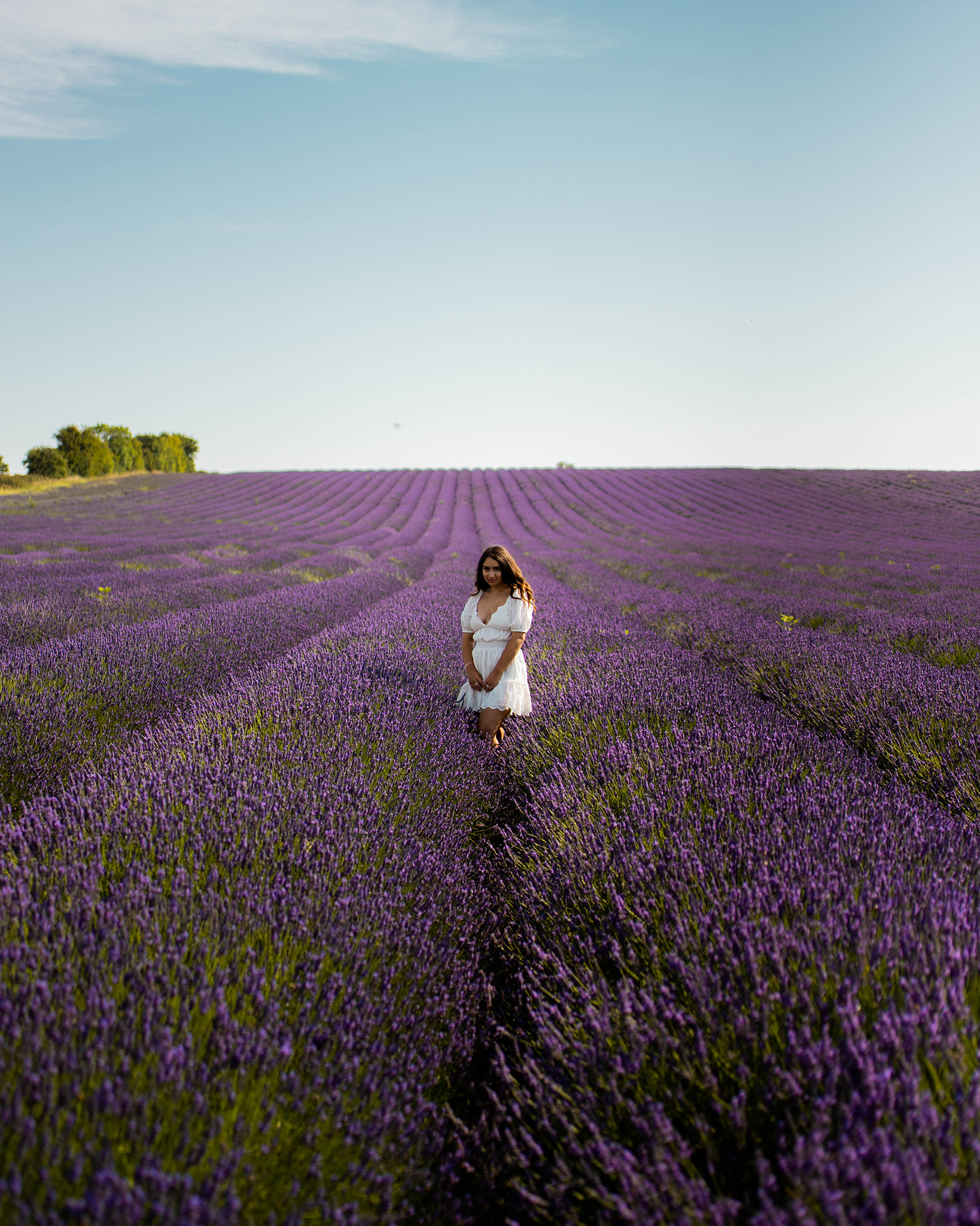 Norfolk Lavender, Postcards from Hawaii, Hitchin