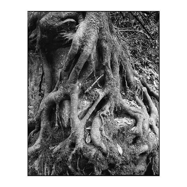 """Fade to Silence"" 2019.002_S026.1 ————————————————— #photography #largeformat #8x10 #intrepid8x10 #intrepidcamera #ilfordphoto #ilfordfilm #ilforddelta100 #analog #analogphotography #film #blackandwhite #landscape #water"