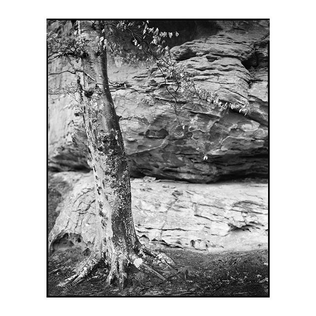 """Fade to Silence"" 2019.002_S039.1 ————————————————— #photography #largeformat #8x10 #intrepid8x10 #intrepidcamera #ilfordphoto #ilfordfilm #ilforddelta100 #analog #analogphotography #film #blackandwhite #landscape #water"