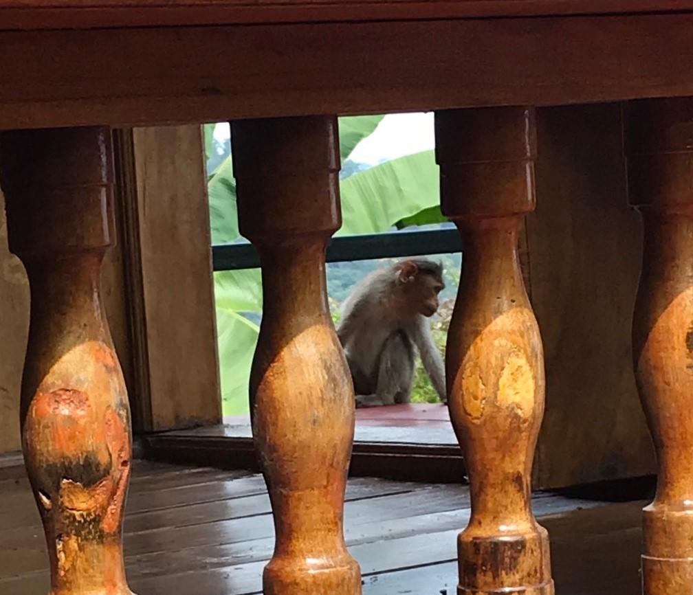 monkey (2).jpg
