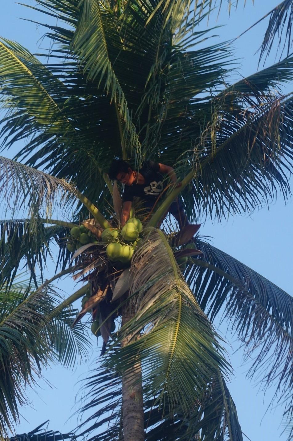 coconut hunter.jpg