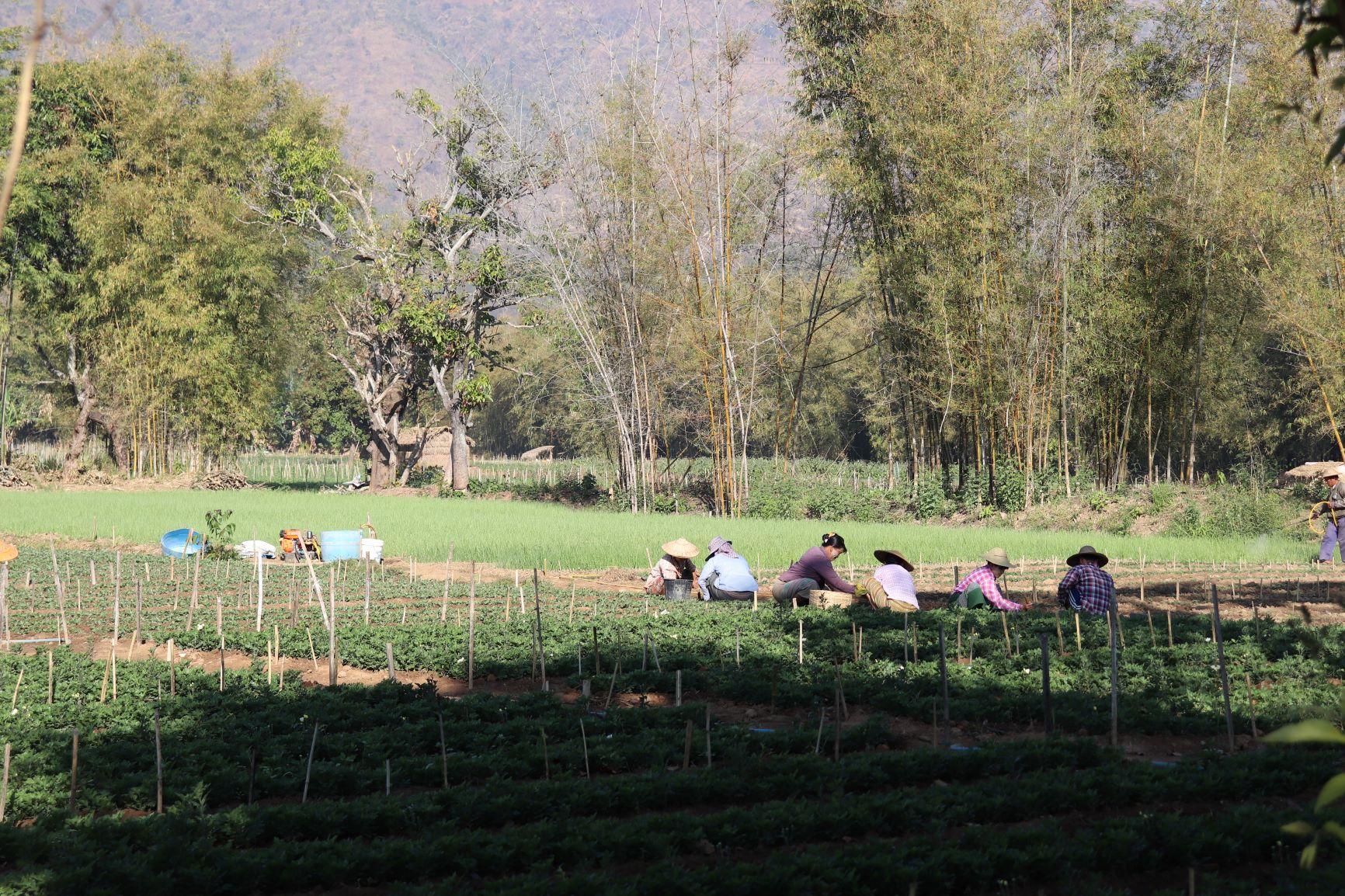 a farm.JPG