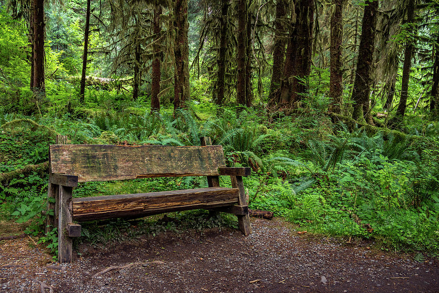 restful-bench-in-the-forest-roslyn-wilkins.jpg