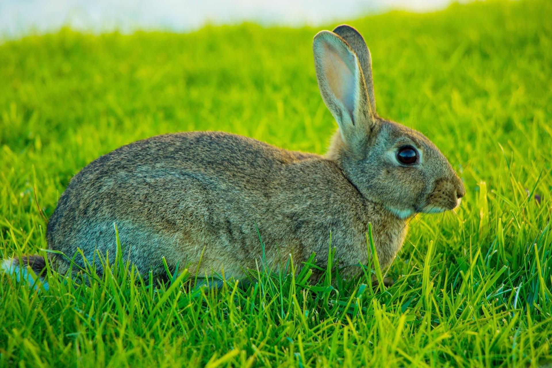 rabbit-2650708_1920 (1).jpg