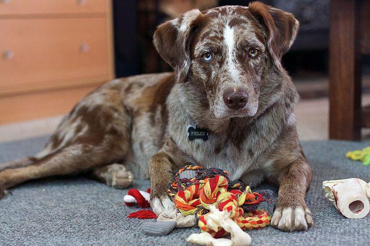 Pet Supplies -