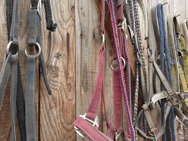 Horse Supplies/Tack -
