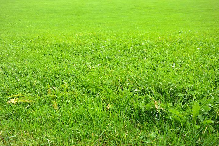 meadow-200576__480.jpg
