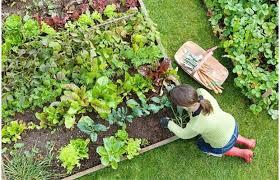 Garden Seed.jpg
