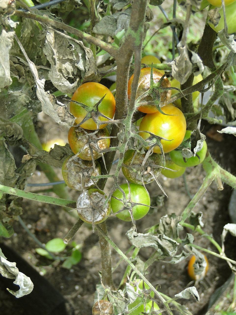 rottentomatoes.jpg