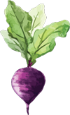 Starwood-Culinary-beet-small.png