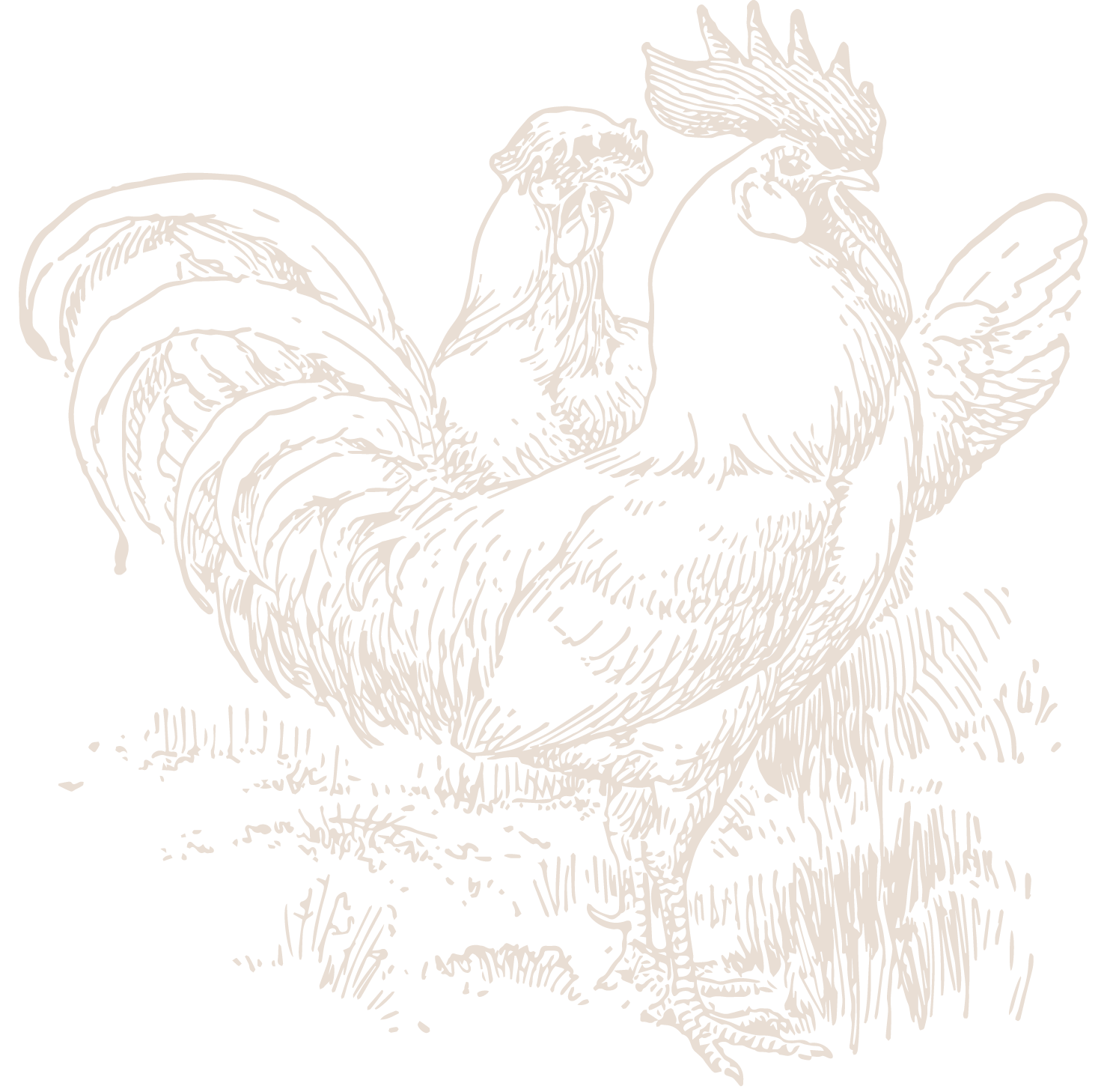 Chicken-17.png