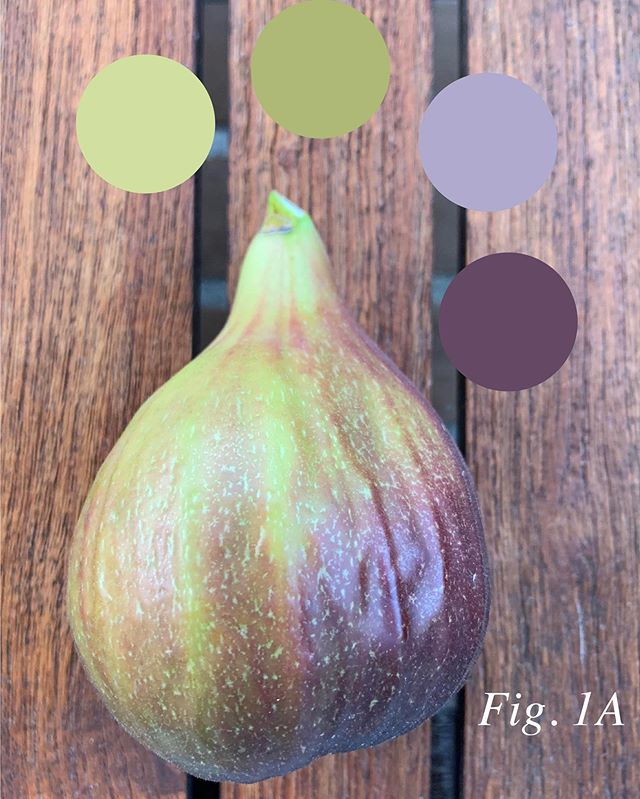 Colour inspiration. See fig. 1A #fig #colourispiration #colorinspiration #color #colour #whyistherenofigemoji
