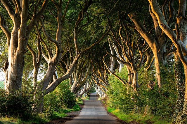 In honor of the GoT season premier, here are some of our favorite pictures from some popular filming locations. Can you name where they are? . . . #gameofthrones #darkhedges #dubrovnikoldtown #klisfortress  #got