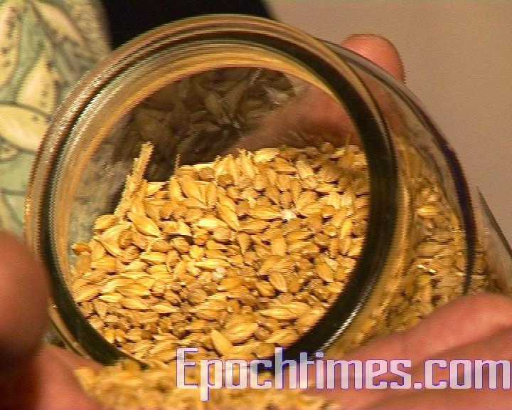 輕度烘焙後的麥粒深度烘焙後的麥粒。烘焙成度的不同將決定啤酒的口味。