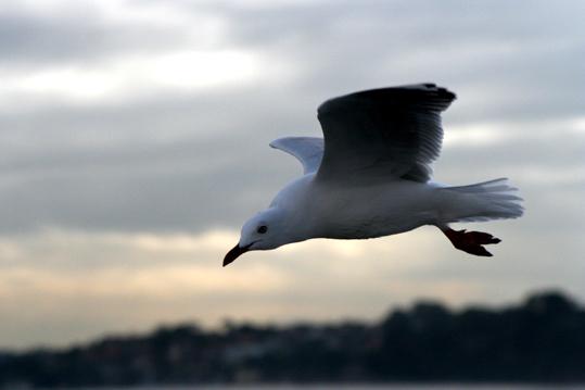 一不小心,還拍到了海鷗!