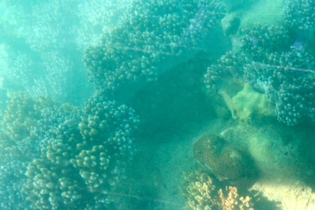 透過玻璃底,還能看到珊瑚。只是拍照就難了——我是說,不容易拍出好照片