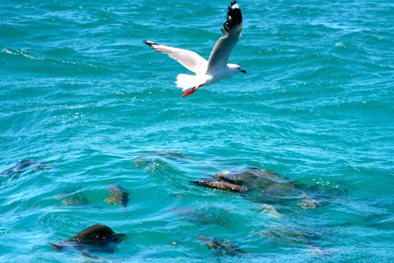 魚鳥同樂之二。