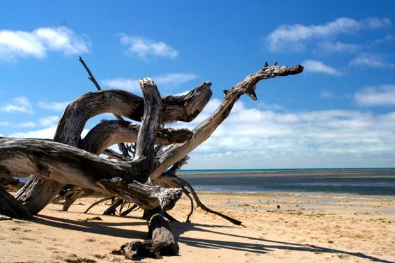 枯枝望著大海,似乎也生出了生命。