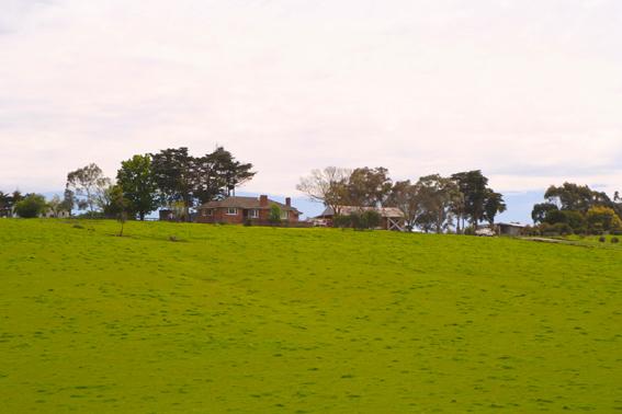 到了澳洲,遇到的第一個室友居然就曾經營過農場,還很大!據說在離墨爾本城區90公里的地方。