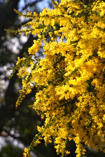 這個攝於十月初,算是澳洲的春天。