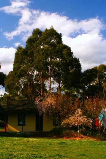 這是墨爾本郊區一所普通的民宅。不但樹上是花,連地上的草地也開滿了小花。每日進進出出於花兒的包圍之中,這才叫艷福不淺。