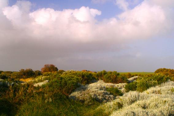 大洋路旁的原野