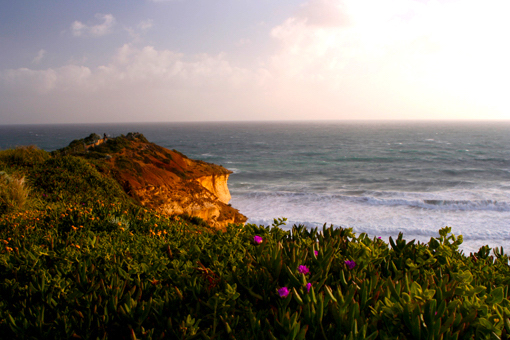 烈烈海風中,春花依然靜靜地溫柔。