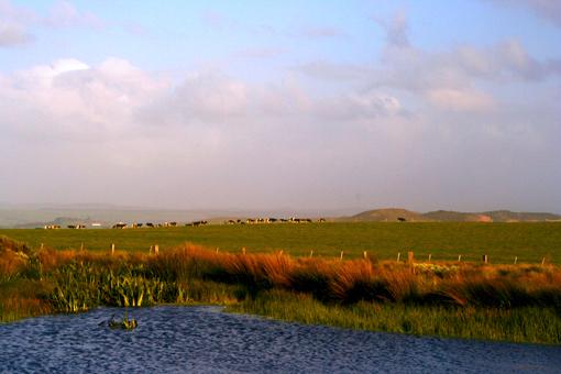 從「十二門徒」回來的路上,經一名西人導遊指點,抄了一條近道回墨爾本,不曾想有許多驚奇的發現,比如,這樣的牧場。那一片明淨的水溏,據說是給牛羊們貯的飲用水。