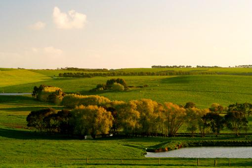 夕陽‧牧場
