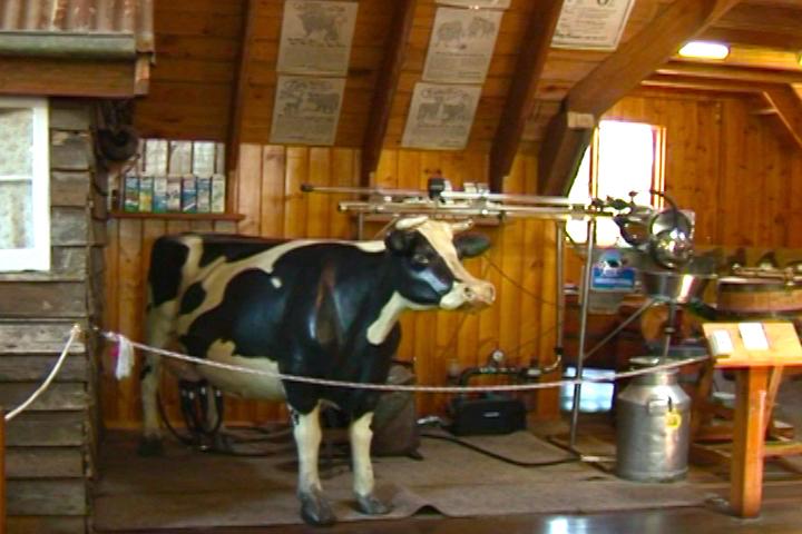 博物館中演示牛奶變奶酪的過程