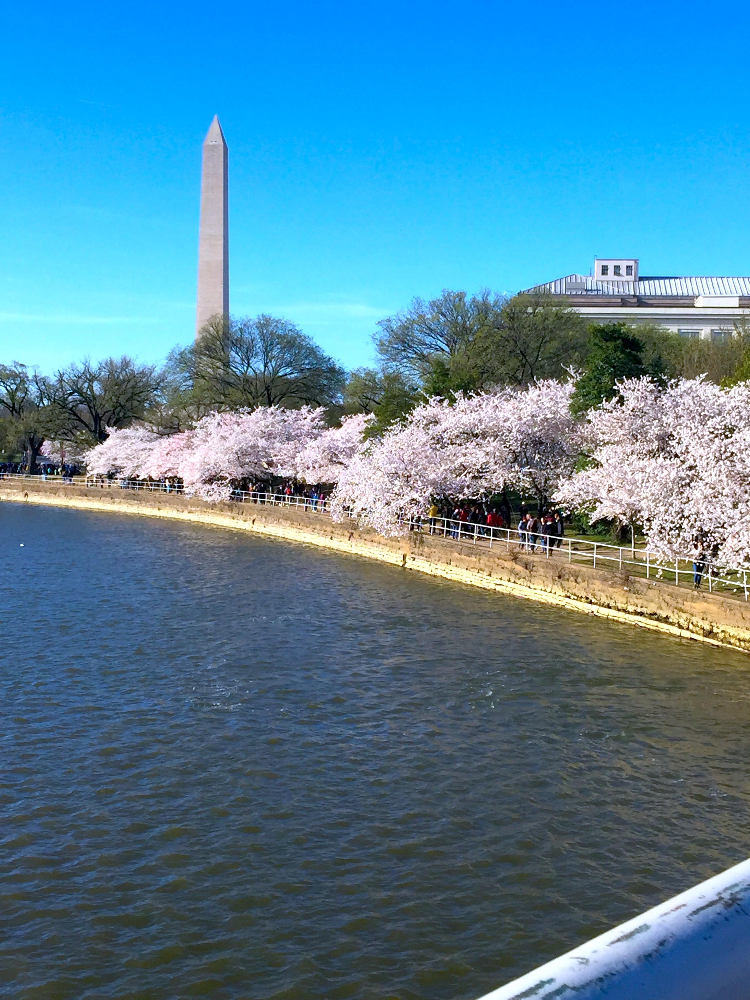 At Washington on April 1, 2019年4月1日攝於華盛頓