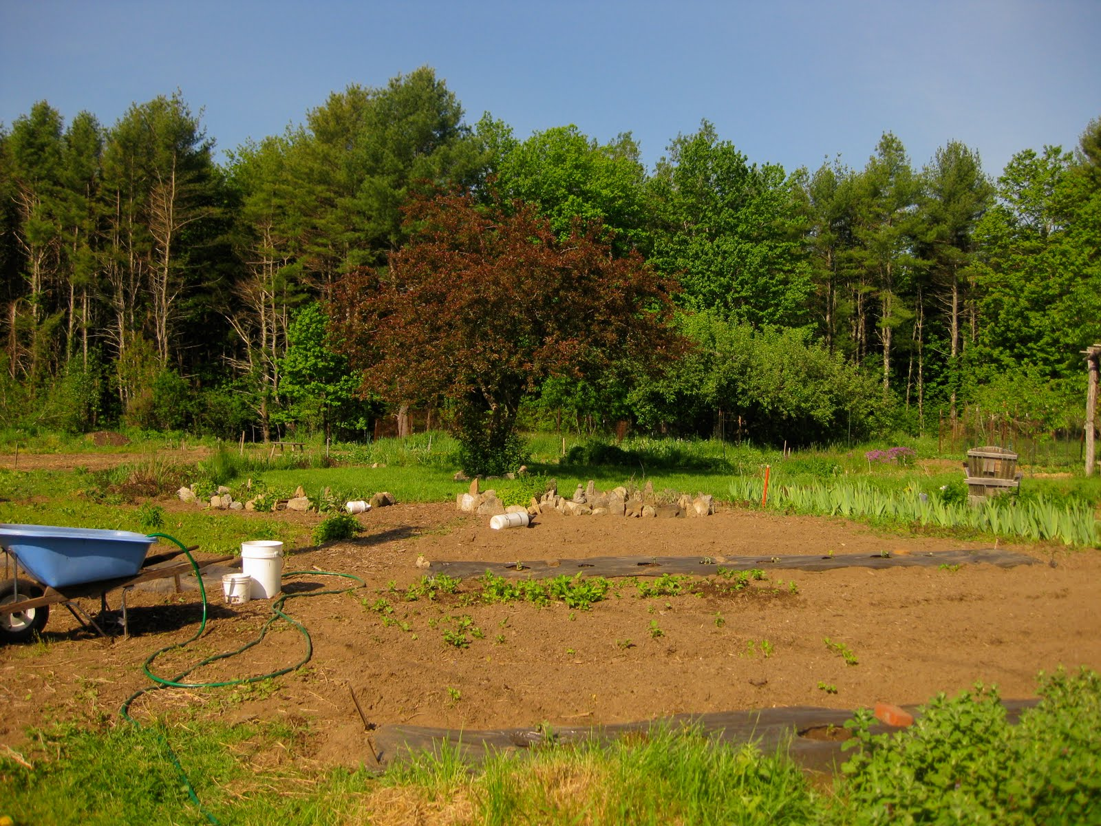This is the main planting area for our vegetables. That's the area we're clearing out, and hopefully it'll look pretty different after this weekend!