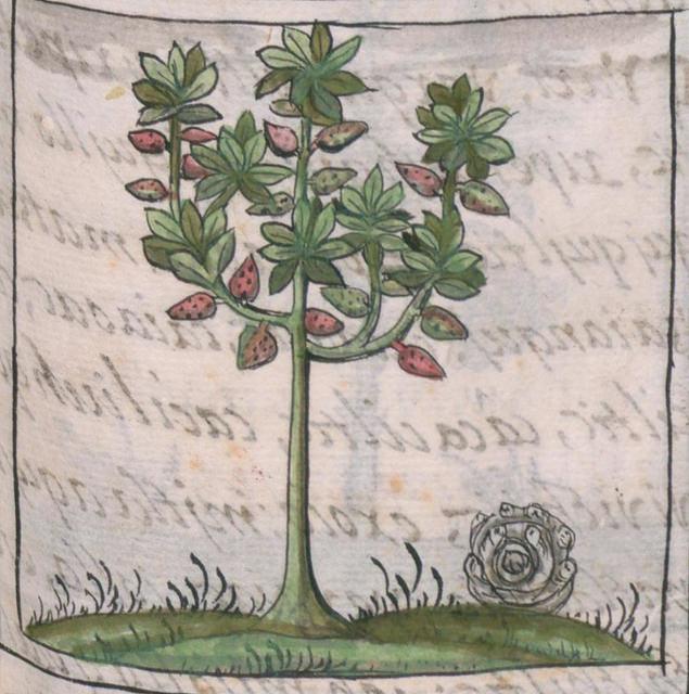 Detalle de una página de la  Historia general de las cosas de nueva España , Libro IX, Folio 123, de Fray Bernardino de Sahagún