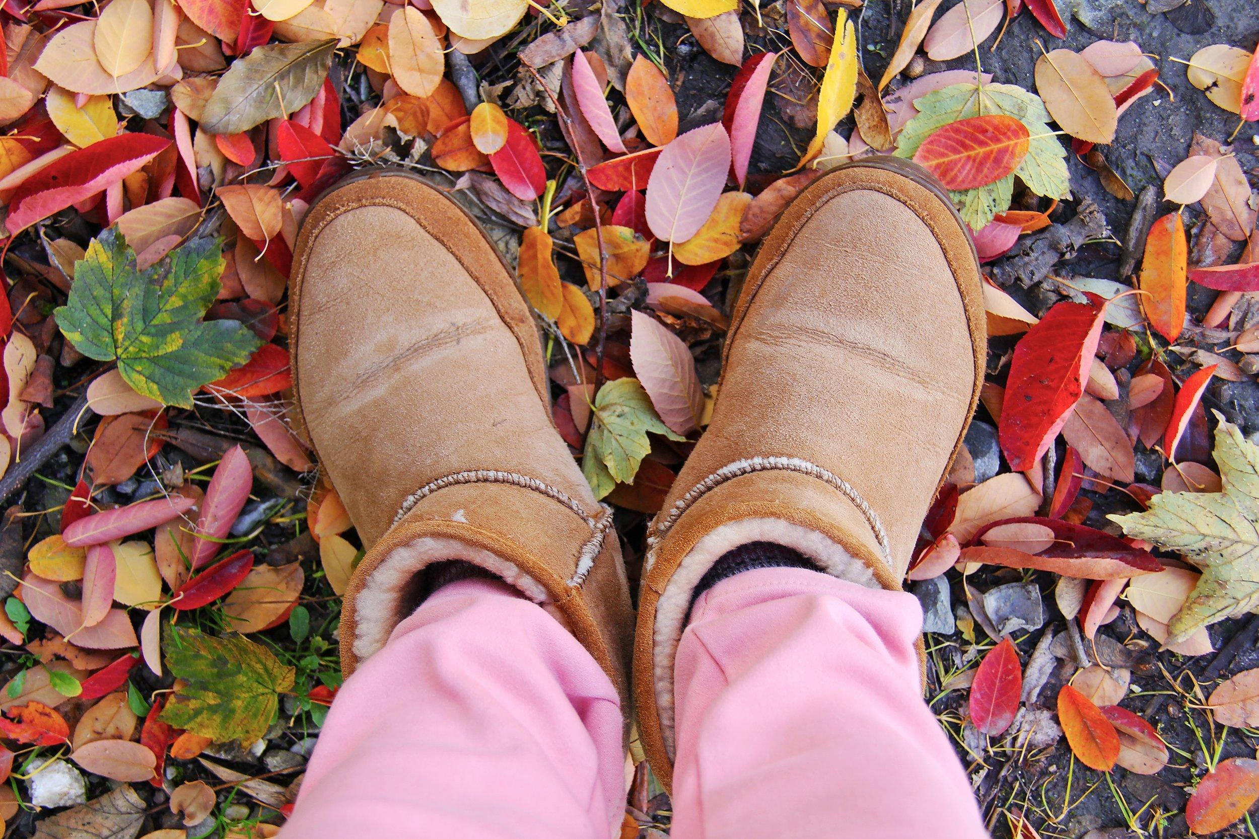 autumn-colorful-leaves-beautiful-160771.jpeg