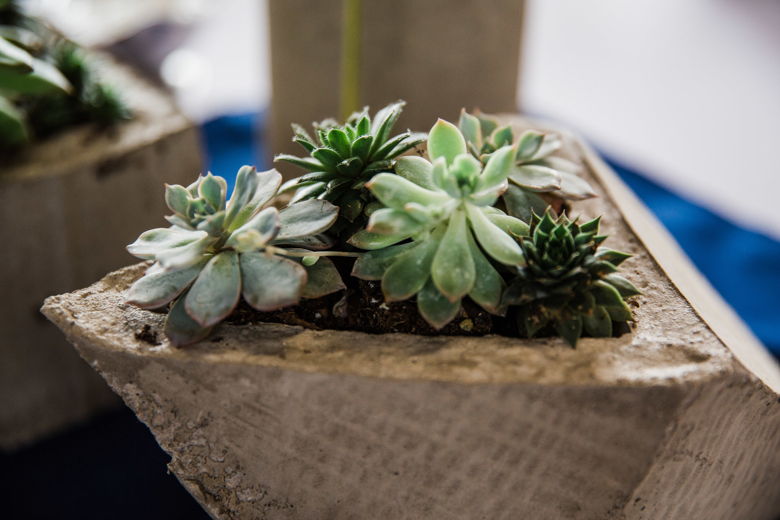 Michigan Wedding Details-Succulents_Tania Howard Photography.jpg
